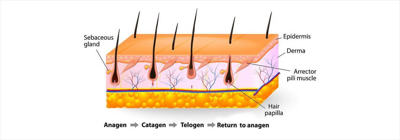 Die Wasserpflanzen gegen den Haarausfall